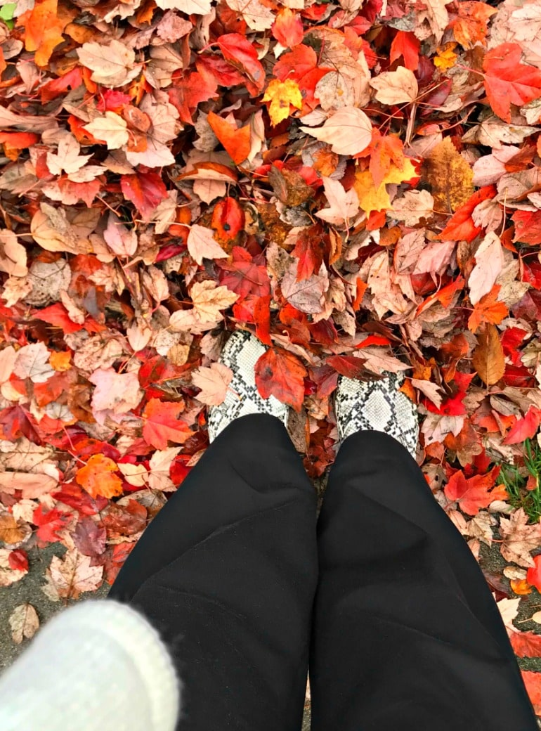 Monday Musings: Falling Leaves and Drowning in Perfume Samples