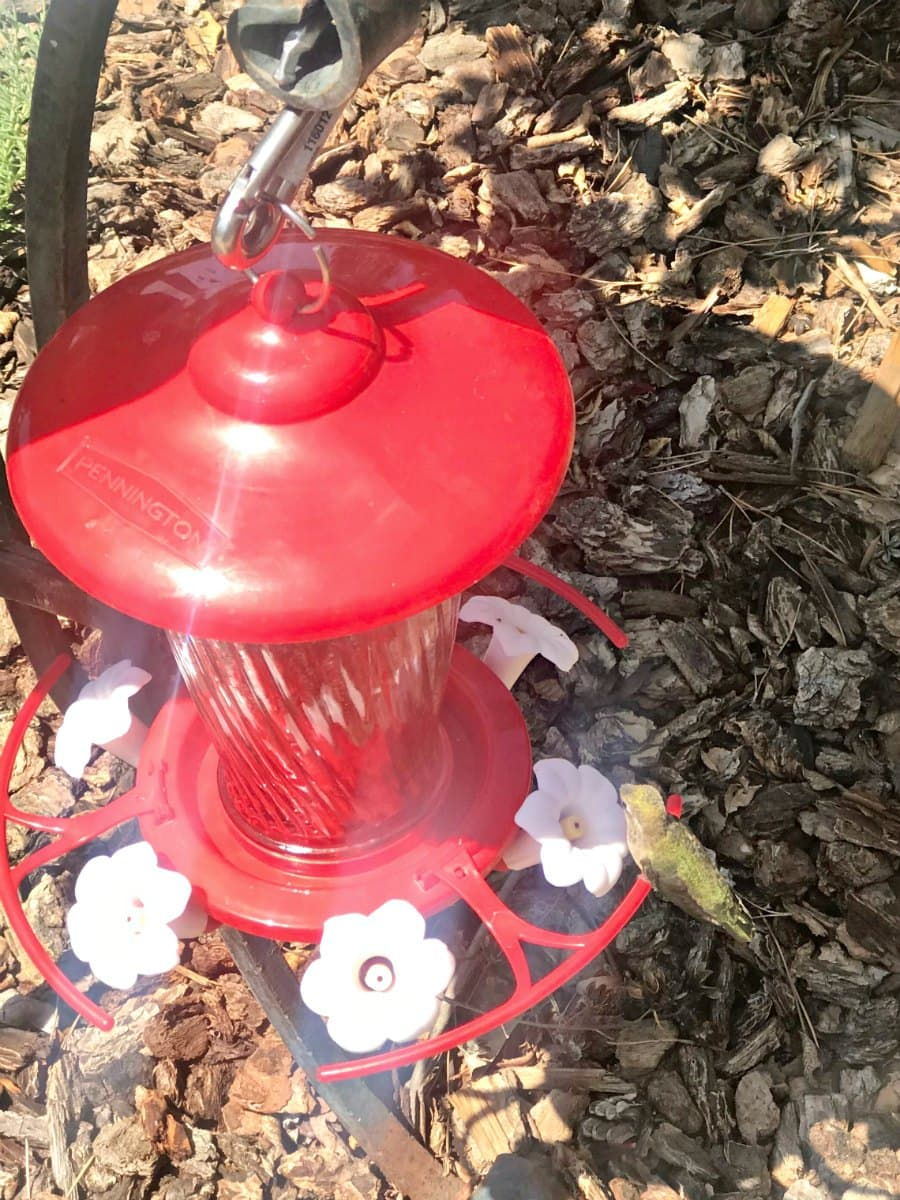 hummingbird at red feeder