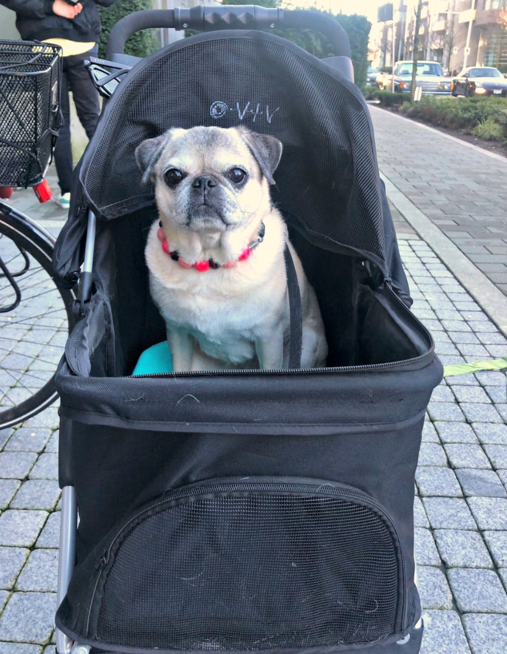 ming about dog strollers